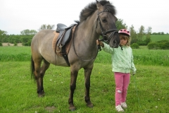 huculský kůň - autor: Procházka David